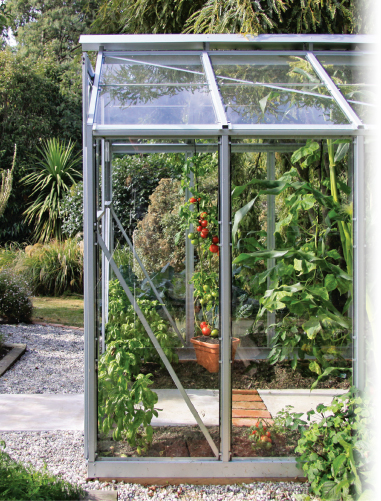 About Christie,  Glasshouse growing tomatoes